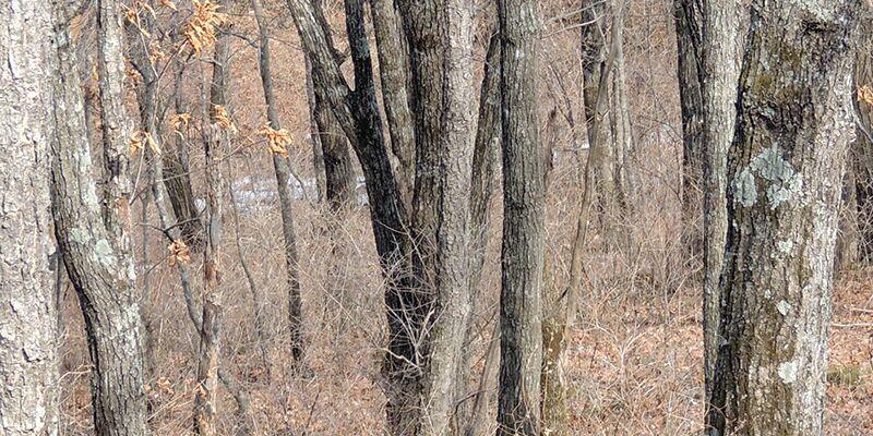 """Casse-tête : une réserve naturelle vous défie de trouver son """"lé…"""